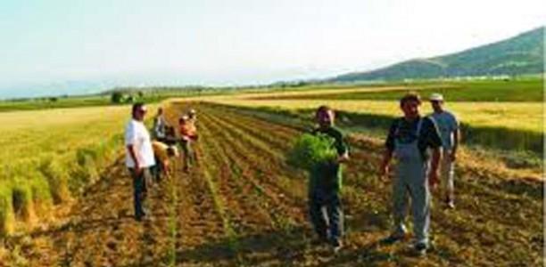 Κίνδυνος μη πληρωμής επιδοτήσεων για χιλιάδες Λαρισαίους αγρότες