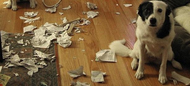 Tο πιο απείθαρχο σκυλί στις ΗΠΑ