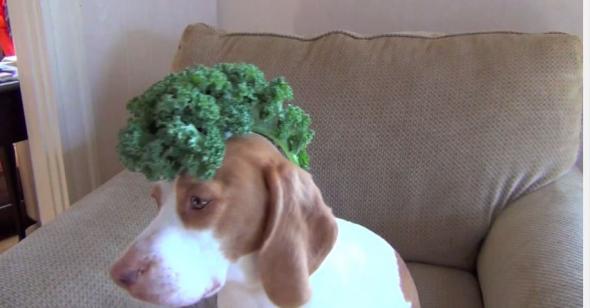 Ένας σκύλος πραγματικός... ζογκλέρ! (video)