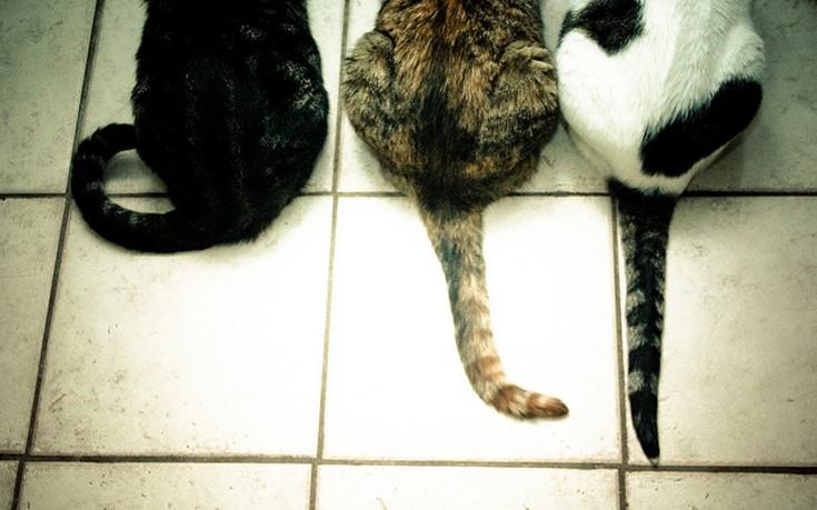 9b2a74bdeca4 Στειρώνονται αδέσποτες γάτες στη Λάρισα
