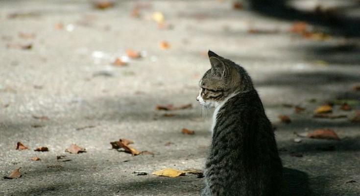bea04a1b78ab Πρόγραμμα στείρωσης αδέσποτων γατών