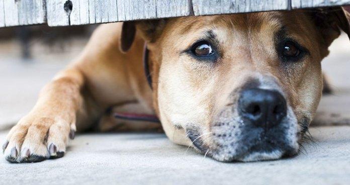 Ανώμαλος άνδρας βίαζε γέρικη σκυλίτσα μπροστά στα μάτια των περιοίκων στο Ηράκλειο