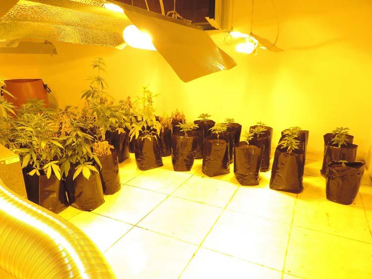 Δύο φυλακισμένοι κι ένας 66χρονος είχαν φτιάξει θερμοκήπιο με δενδρύλια χασίς στον Αγιόκαμπο! (φωτό)