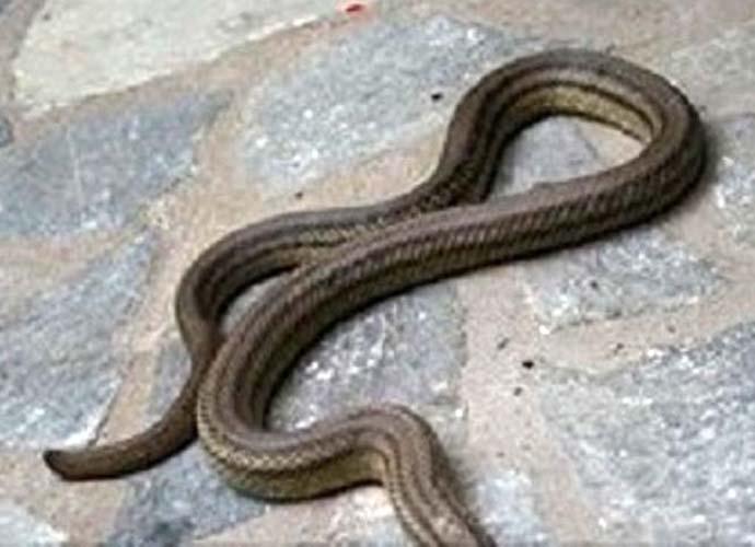 Γιατί γέμισε φίδια η Λάρισα; – Δείτε τι απαντά η δημοτική αρχή