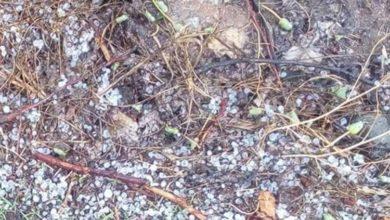 """Χαλάζι """"σκέπασε"""" μεγάλο τμήμα της επαρχίας Αγιάς - Καταστροφές σε πολλές καλλιέργειες (φωτό)"""