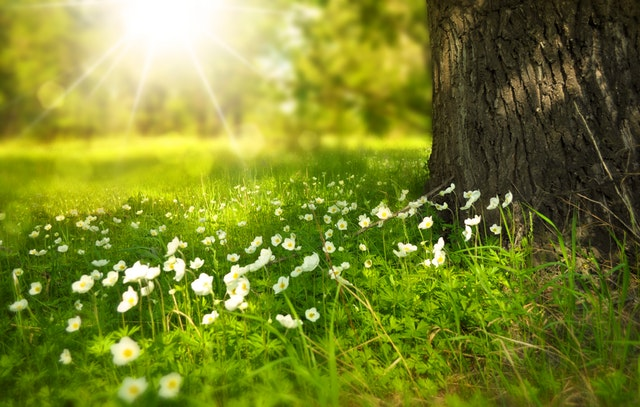 Η επαφή με τη φύση κάνει καλό στην υγεία