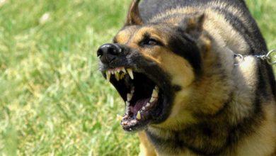 Τρόμος σε χωριό της Αγιάς: Σκύλος επιτέθηκε σε οκτάχρονο κοριτσάκι!