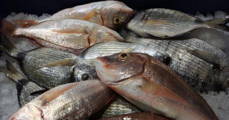 Δεσμεύτηκαν αλιεύματα στο Κερατσίνι