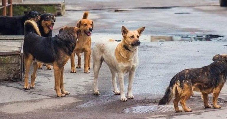 Σκύλος επιτέθηκε και δάγκωσε εξάχρονο έξω από δημοτικό σχολείο στον Λαγκαδά Θεσσαλονίκης