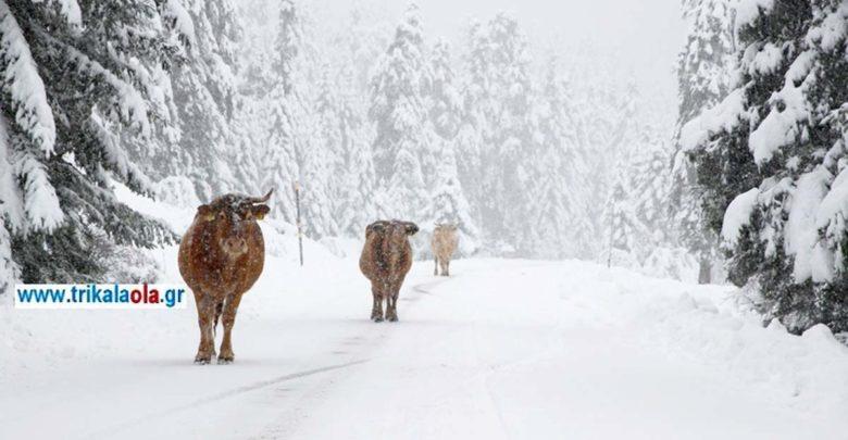 Έντονη χιονόπτωση σε Ελάτη, Περτούλι, Νεραϊδοχώρι Τρικάλων (βίντεο)