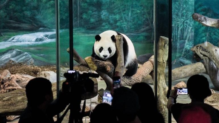 Κίνα: Την πρώτη του δημόσια εμφάνιση έκανε το γιγάντιο πάντα  Γκάο Γκάο