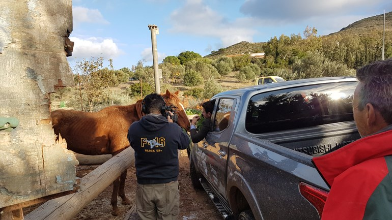 Ακόμα και άλογα συναντήσαμε κατά τη διάρκεια της δοκιμασίας!