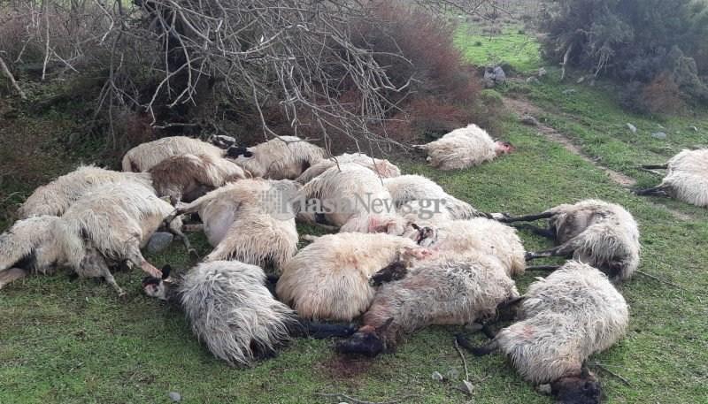 Χανιά: Κοπάδι προβάτων σκοτώθηκε από κεραυνό