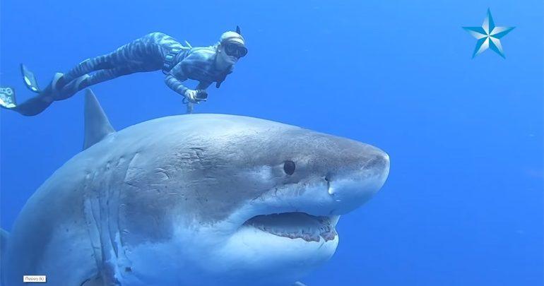 Χαβάη: Δύτες κολύμπησαν πλάι σε έναν γιγαντιαίο μεγάλο λευκό καρχαρία