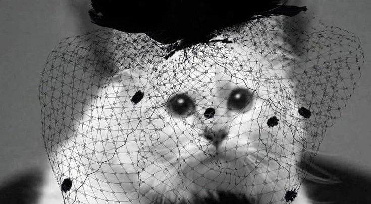 Με μαύρο βέλο η γάτα του Καρλ Λάγκερφελντ