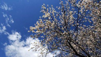 Καλός ο καιρός αλλά με έντονους ανέμους το τριήμερο