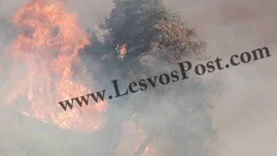 Υπό πλήρη έλεγχο η μεγάλη δασική πυρκαγιά στη Λέσβο