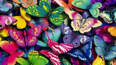 «Σκεπάστηκε» η Κύπρος από εκατομμύρια πεταλούδες