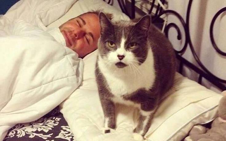 Αν έχεις γάτα, ξέρεις