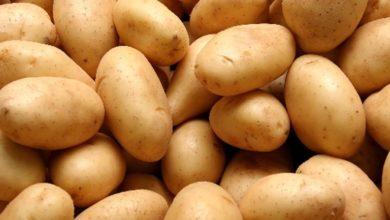 Δεσμεύτηκαν έξι τόνοι πατάτες σε επιχείρηση στου Ρέντη