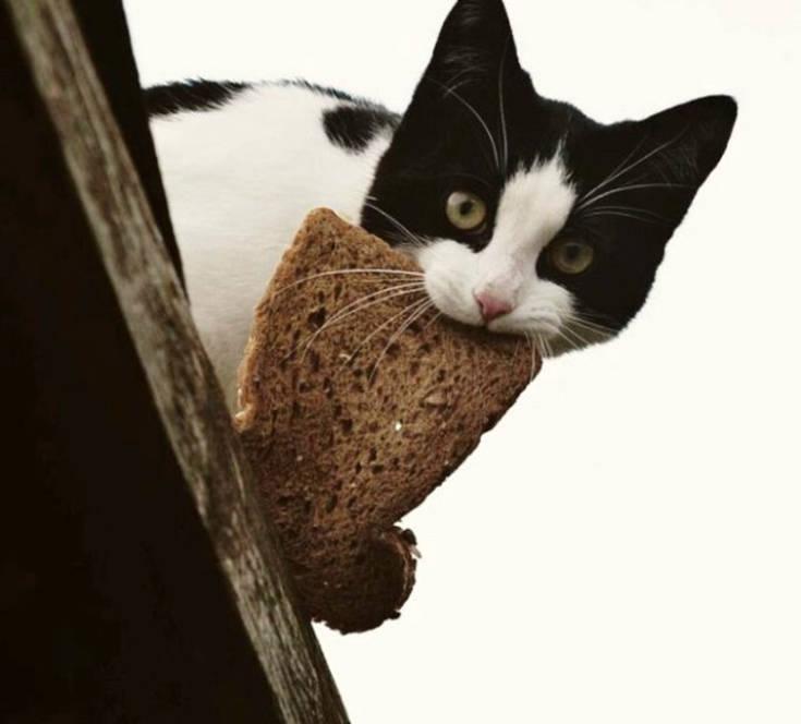 Όποιος έχει γάτα καταλαβαίνει
