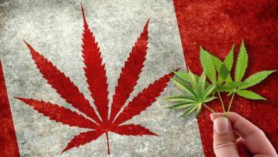 Καναδάς: Οι φίλοι της κάνναβης γιόρτασαν την πρώτη επέτειο από  τη νομιμοποίηση της χρήσης της