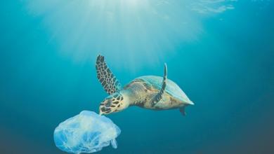 Το 50% των απορριμμάτων στις ελληνικές θάλασσες είναι κουτιά αλουμινίου, πλαστικά μπουκάλια και σακούλες