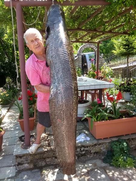 Γουλιανό 70 κιλών αλίευσε Καρδιτσιώτης στη Λίμνη Πλαστήρα