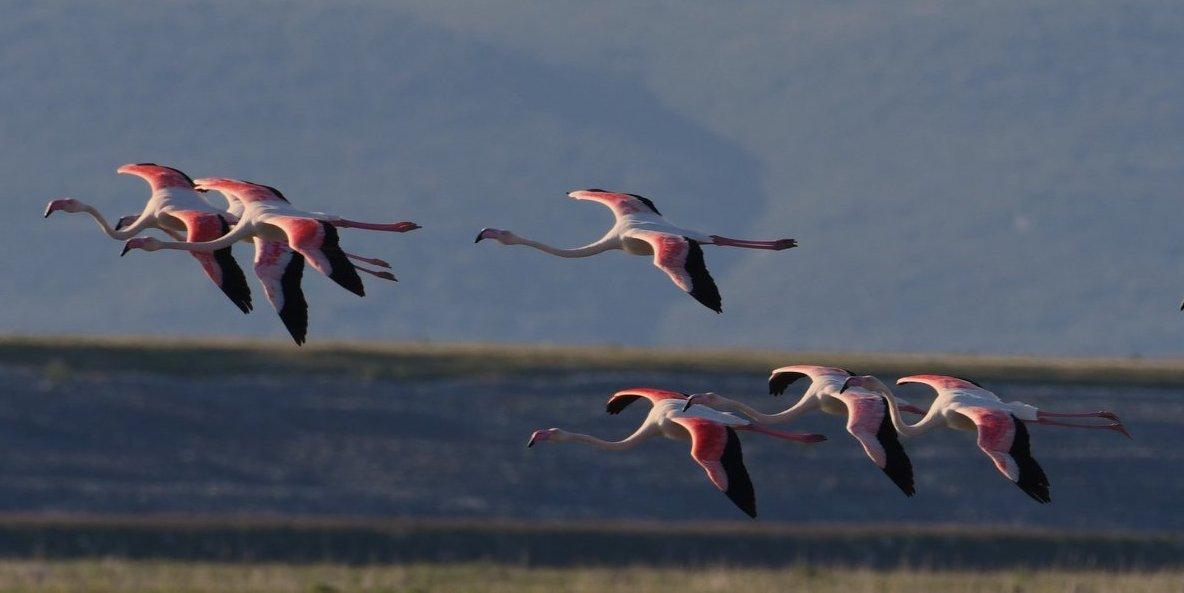 Εντυπωσιακές εικόνες στην Κάρλα – Σπάνια πουλιά βρήκαν τον τόπο τους λίγο έξω από τον Βόλο (φωτο)