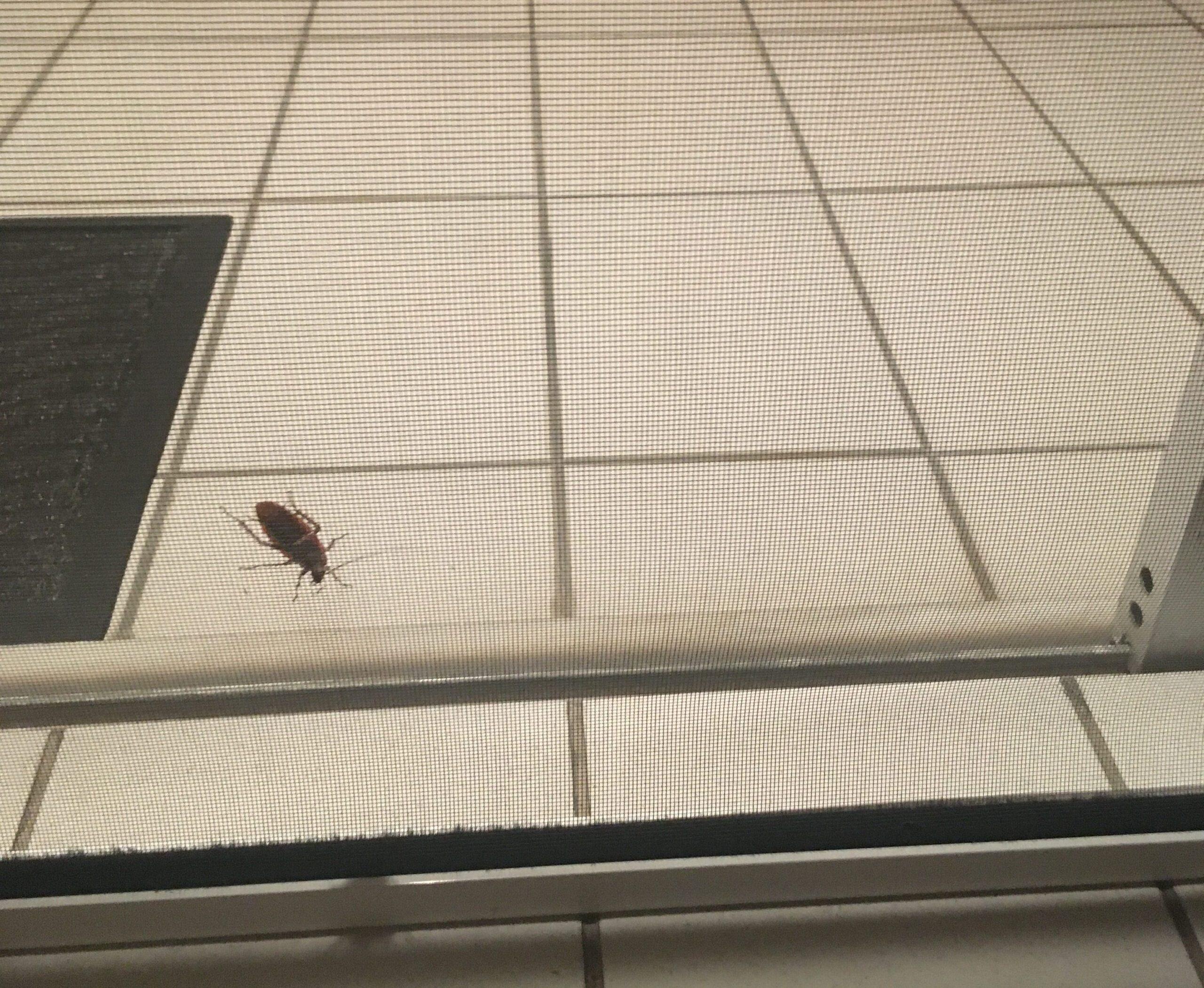 """Ο εφιάλτης επέστρεψε: """"Πόλεμος"""" με τις κατσαρίδες στη Λάρισα"""